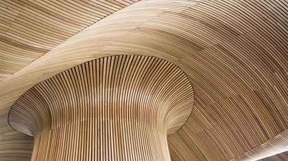 Welsh Assembly wooden roof