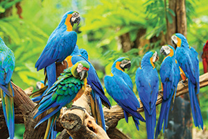Macaw parrots sitting in a tree