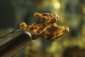 Close up of a nugget of gold