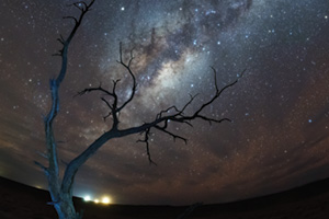 Milky way view in the sky with dead tree in the foreground
